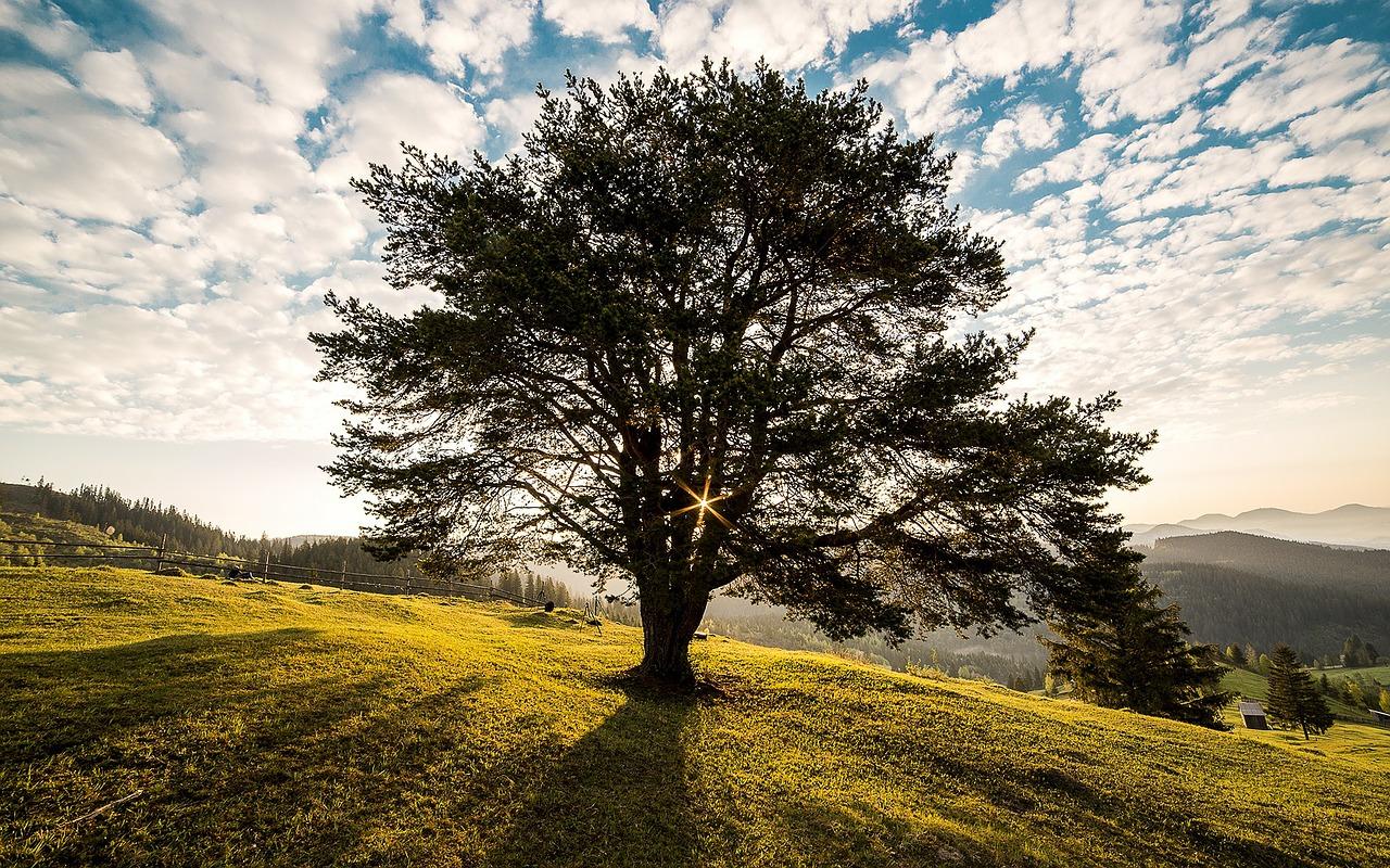 Ritualarbeit - ein starkes Instrument zur Stärkung von Coping-Strategien